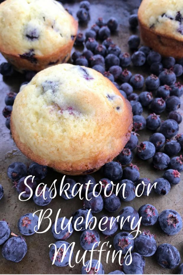 Saskatoon or Blueberry Muffins
