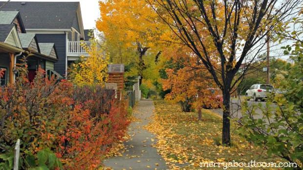 Fall in Calgary