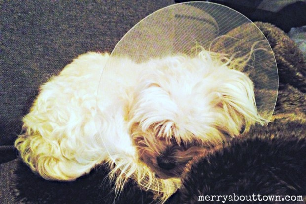 Cooper and his cone - Merry About Town