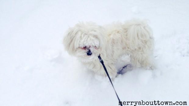Cooper loves the Spring Snow in Calgary - =- .jpg