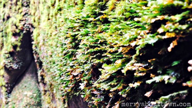 Moss Up Close - Merry About Town