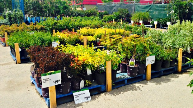 Bushes and Shrubs at Superstore - Merry About Town