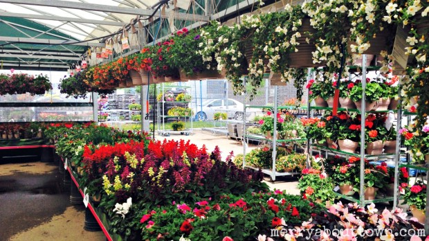 Heading to the Annuals Aisle - Merry About Town