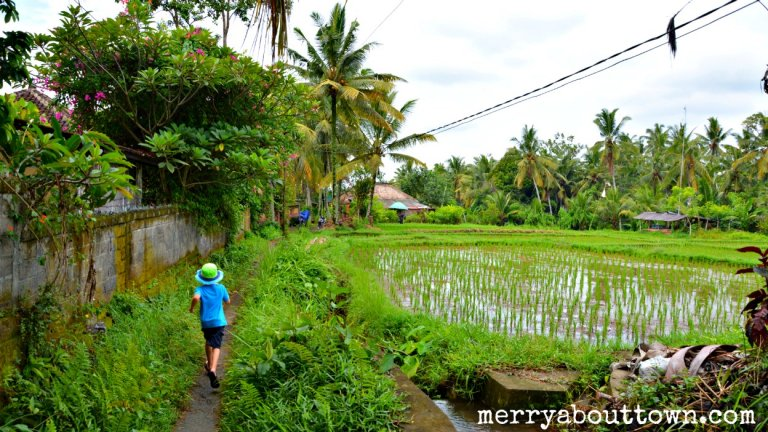Exploring the Rice Paddies Outside Ubud