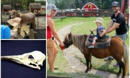 Parties in Calgary for Kids Who Love Animals