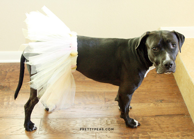 8 Adorable Diy Halloween Dog Costumes Merry About Town