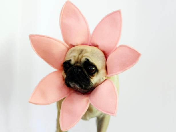 Flower Dog Costume