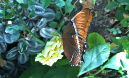 Chasing Happy – Stretching My Dormant Wings