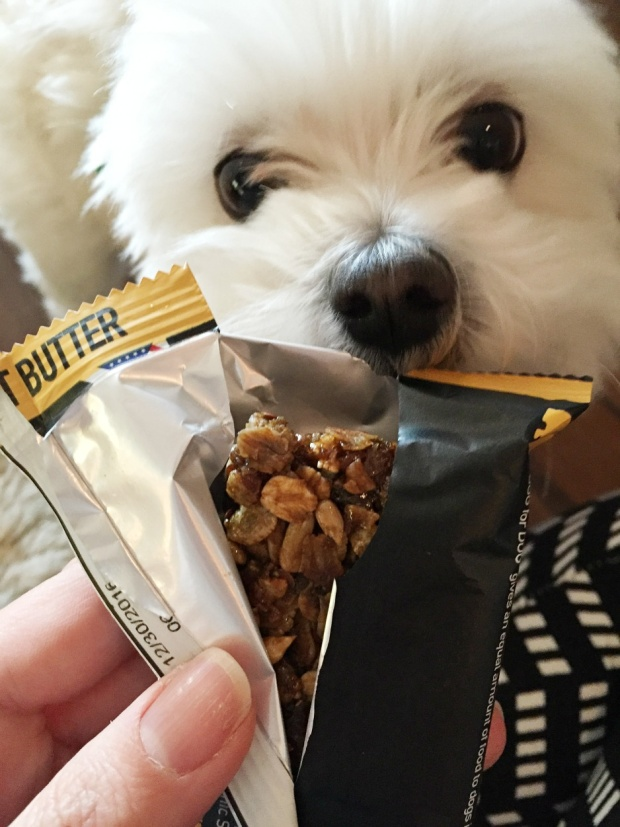 Cooper can't wait to try the Dog for Dog Dogsbar