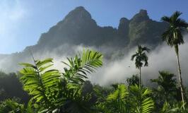 Elephant Hills Tented Camp – Jungle