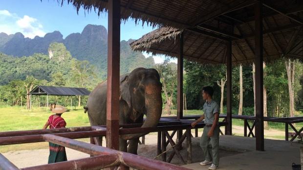Meeting an elephant up close