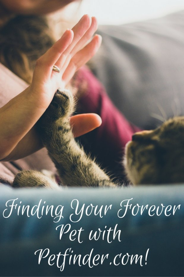 finding-your-forever pet-with-petfinder-com