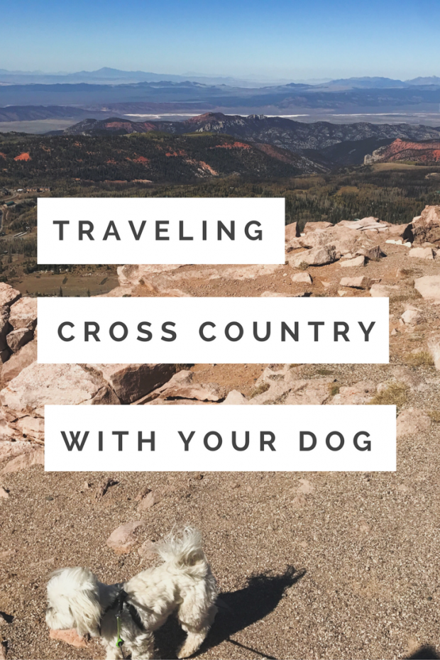 Roadtripping with your dog