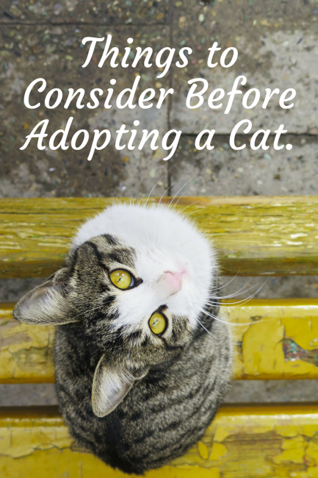 Things to Consider When Adopting a Cat.