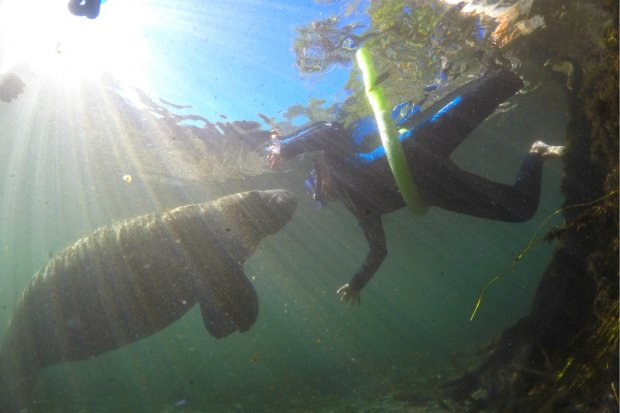 Getting up close and personal on the Chassahowitzka