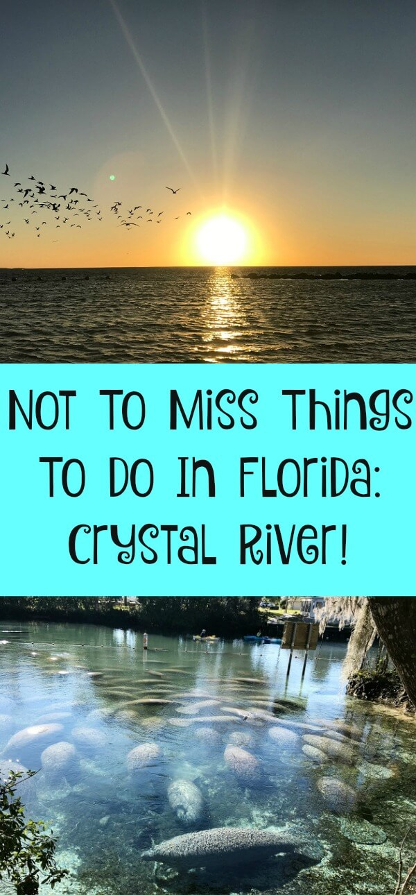Not To Miss Things To Do In Florida Crystal River!