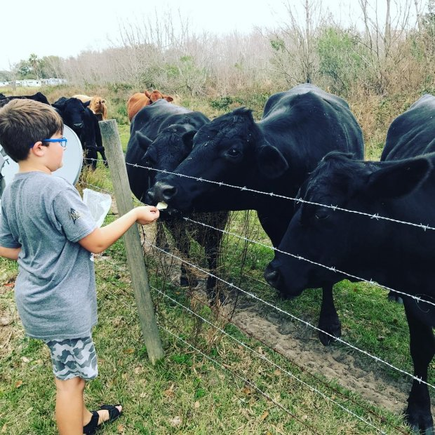 Evan feeding cows