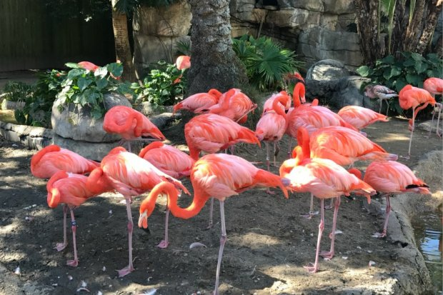 Flamingos at the New Orleans Zoo