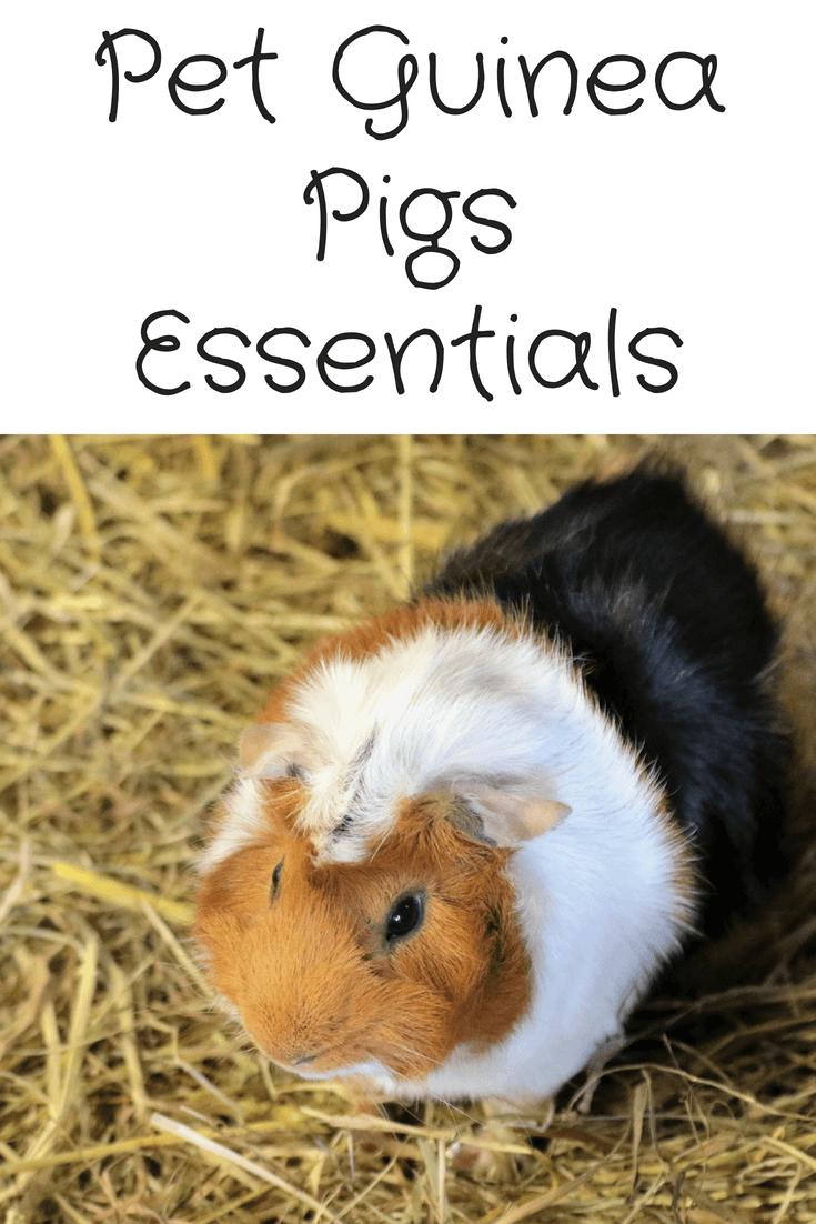 Pet Guinea Pigs Essentials