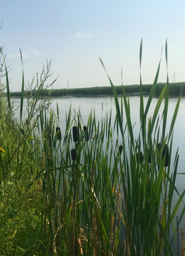 wetlands and Ralph Klein Park
