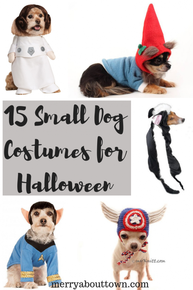 15 Small Dog Costumes for Halloween