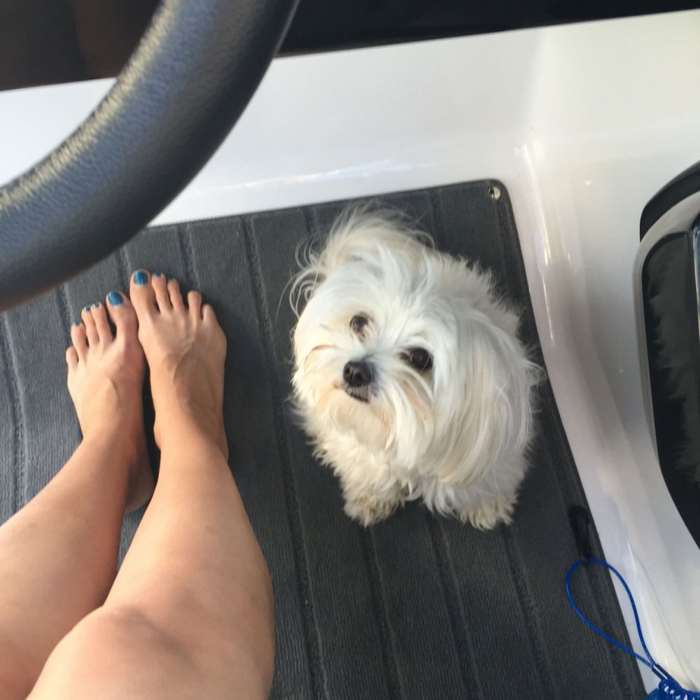 Cooper learning to drive the boat