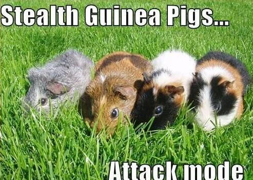 stealth pigs