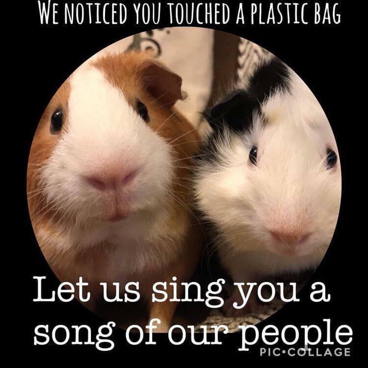 Guinea pig meme about plastic bags