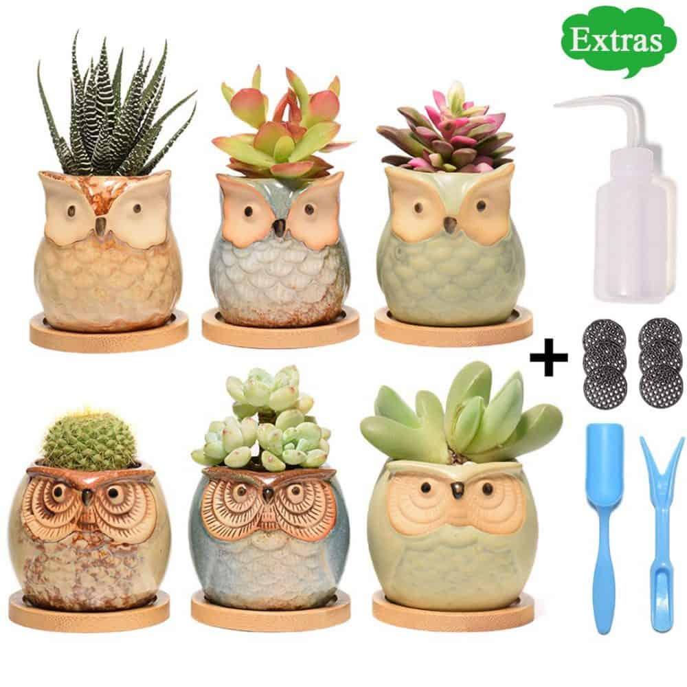 owl succulent pots