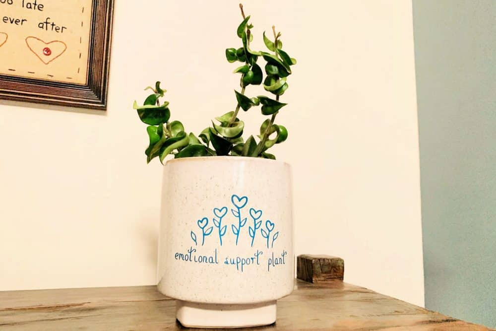 Emotional-Support-Plant