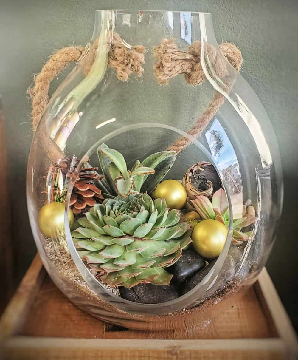 Custom succulent planter from Earth Accents